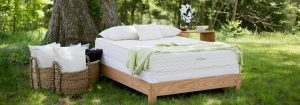 savvy rest eco-friendly mattresses for every budget on elemental green