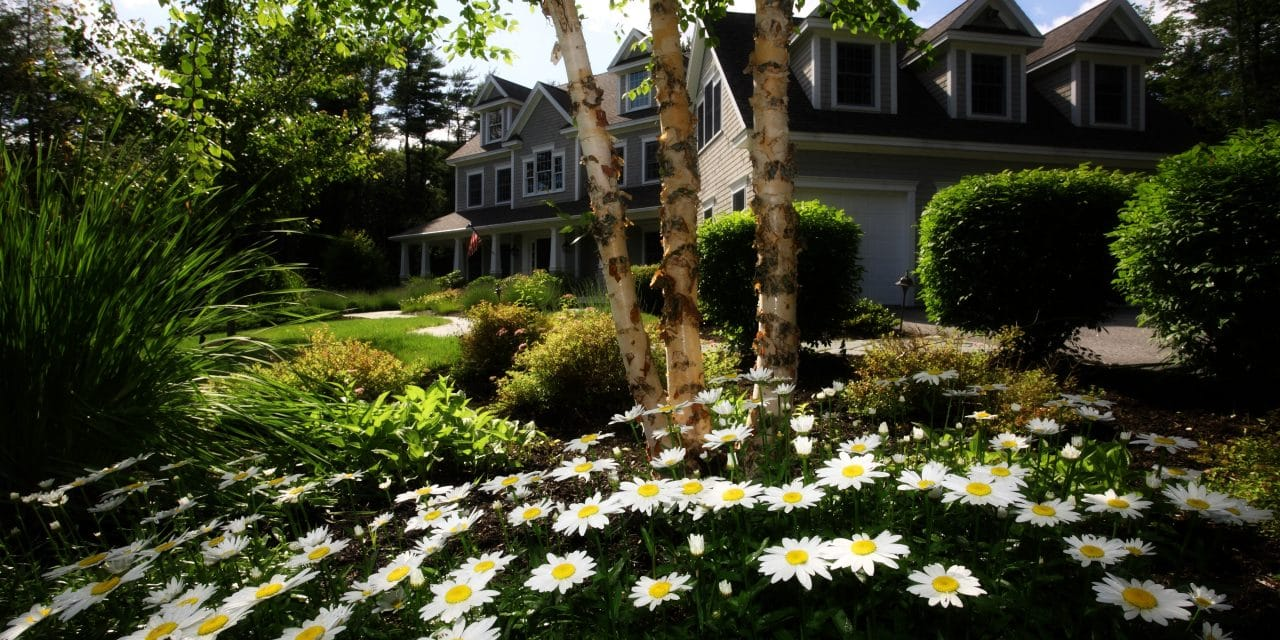 How to Make Your Yard More Sustainable