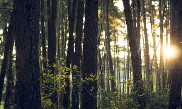 What Forestry Labels Really Mean [Infographic]